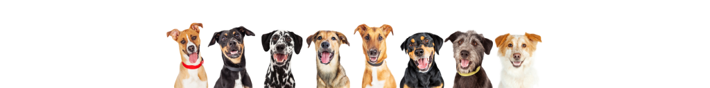 Dog Training Services in Harvey pics