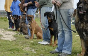 Obedience training classes in Russell IL