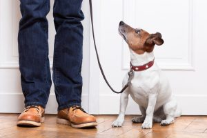 Dog obedience training in Lansing